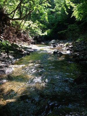 岩手県渓流釣り葛丸川