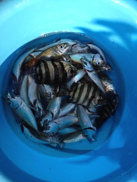 富山県水橋漁港で釣り